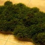 Коврик в ванную из травы
